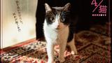 【プレゼント】『4/猫 -ねこぶんのよん-』オリジナルポストカードを【5名様】にプレゼント!