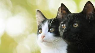 風間俊介は●●●タイプ!猫がかわいいすぎる映画『猫なんかよんでもこない。』癒しの猫画像いっぱい!