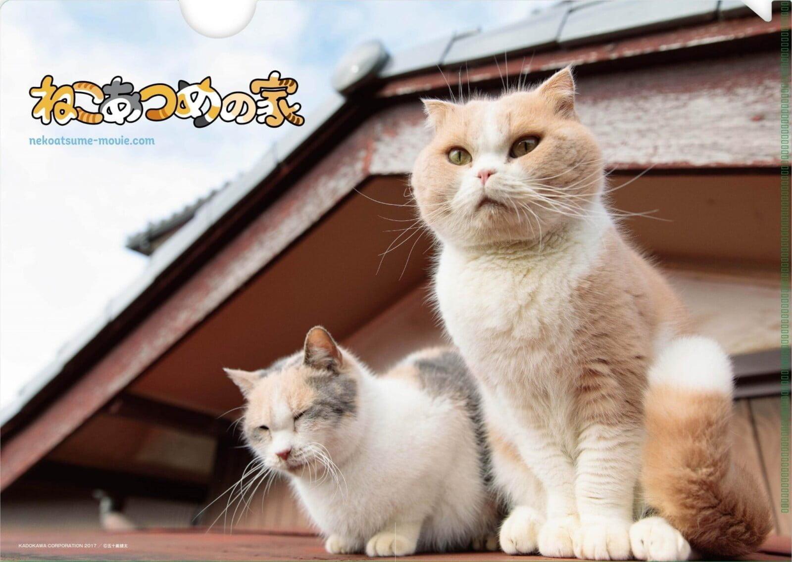 【プレゼント】日本初となる人気アプリの実写化!映画『ねこあつめの家』特製クリアファイルを【5名様】にプレゼント!