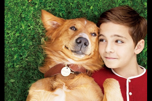 【プレゼント】すべての犬好きの夢を叶える!『僕のワンダフル・ライフ』一般試写会に【15組30名様】をご招待!