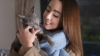 猫は抱くもの_メイン