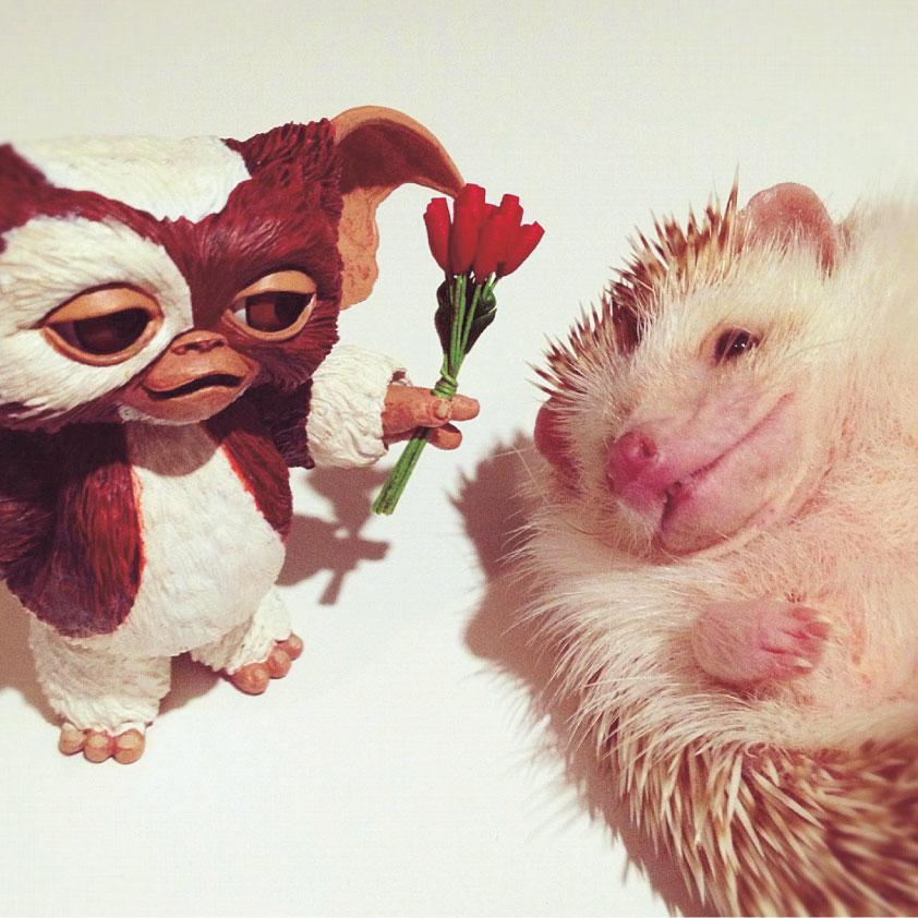 GIZMO_darcytheflyinghedgehog